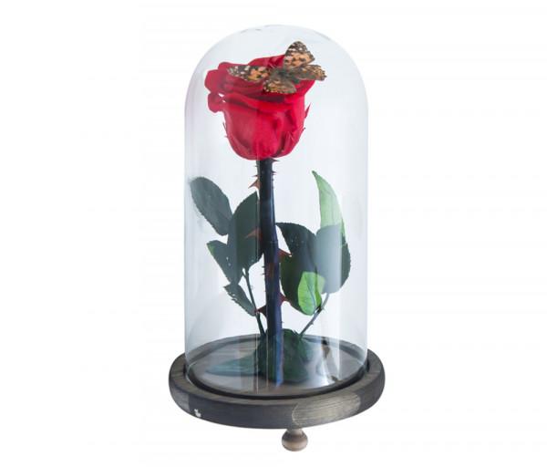 Բնական անթառամ կարմիր վարդ և բնական թիթեռ (23սմ) EM Flower