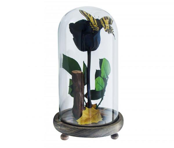 Բնական անթառամ սև վարդ և բնական թիթեռ (23սմ) EM Flower