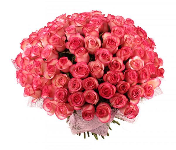 Dutch roses 101 pcs Coco Fiori