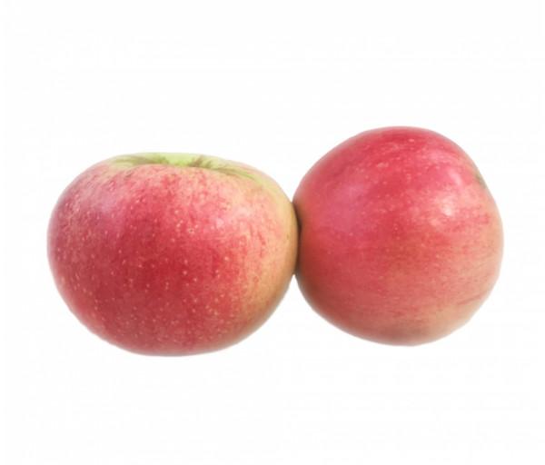 Խնձոր «Օրիորդ»