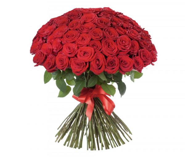 Հոլանդական վարդեր Կարմիր 151 հատ Coco Fiori