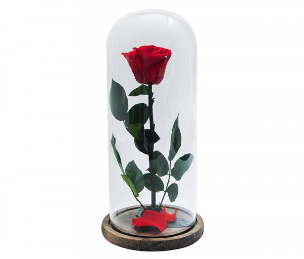 Բնական անթառամ կարմիր վարդ կոլբայում (33սմ) EM Flower