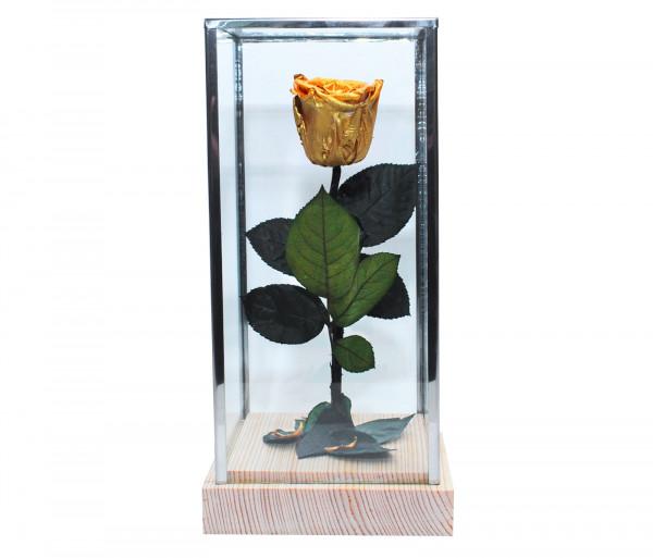 Երկարակյաց ոսկեգույն վարդ կոլբայով EM Flower