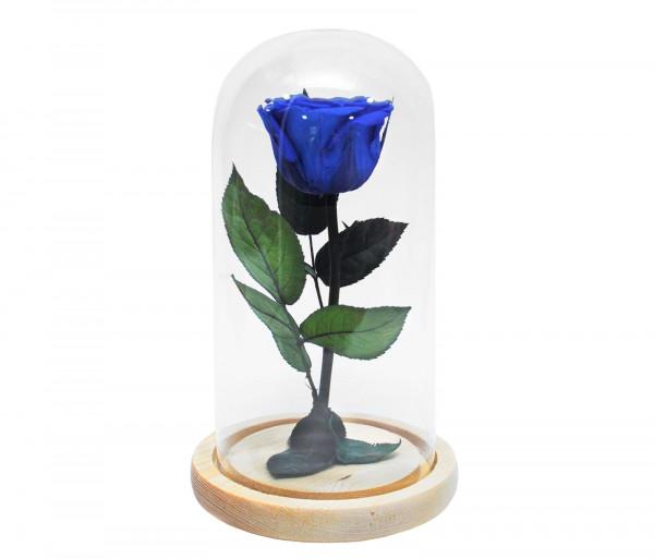 Երկարակյաց կապույտ վարդ կոլբայով EM Flower