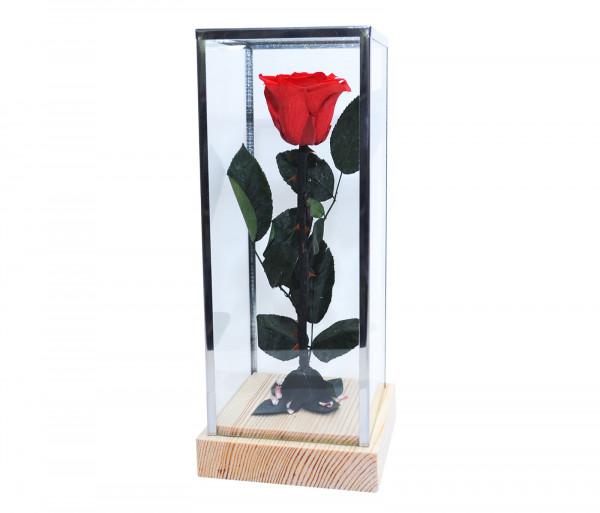 Երկարակյաց կարմիր վարդ կոլբայով EM Flower