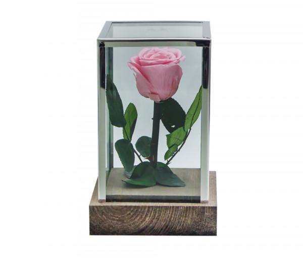 Բնական անթառամ վարդագույն վարդ Ուղղանկյուն (18սմ) EM Flower