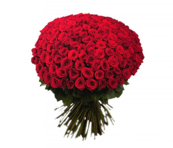 Հոլանդական վարդեր Կարմիր 303 հատ Coco Fiori