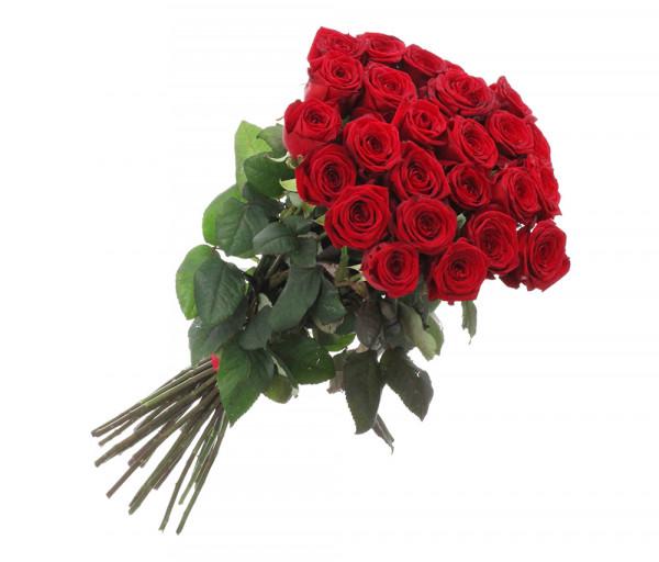 Dutch roses Red 31 pcs Coco Fiori