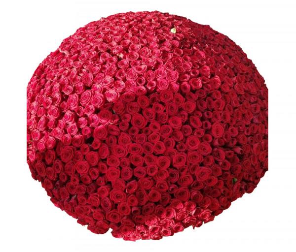 Հոլանդական վարդեր 1001 հատ 70սմ Coco Fiori
