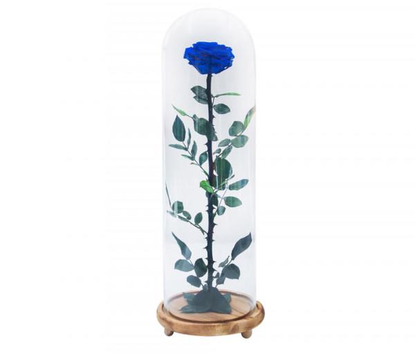 Բնական անթառամ կապույտ վարդ (52սմ) EM Flower