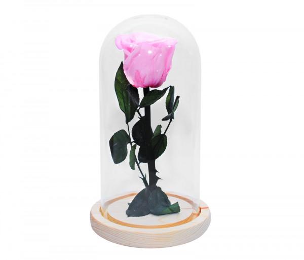 Երկարակյաց վարդագույն վարդ կոլբայով EM Flower